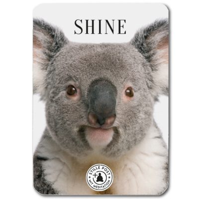 stille_post_shine_koala_B
