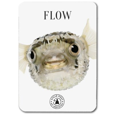 stille_post_flow_fisch_B